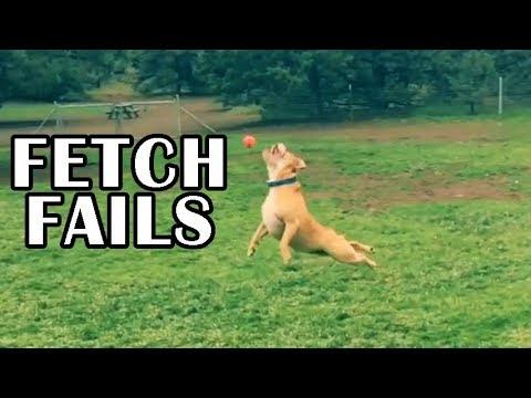 'Dog Fetch FAILS Compilation' || CFS