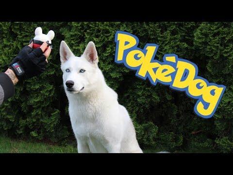 How To Catch A Poke Dog?