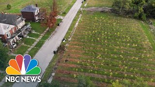 This Tree Farm Is Bringing Life Back To Detroit's East Side | NBC Nightly News