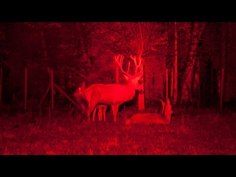 Hunting With Red Light  - Your Amazing Step Forward In Hunting