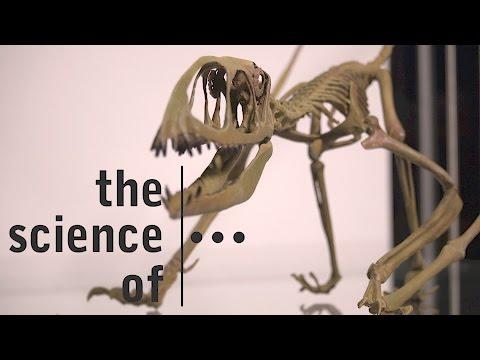 Mary Anning... Fossil hunter extraordinaire (Darwin & Dinosaurs)
