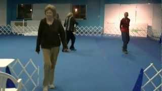 Companion Dog Sport Obedience, Novice Class Starring Yuri The Italian Greyhound