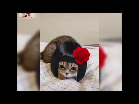 cute cats doing funny things