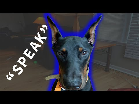 How To Train Your Dog To 'Speak'