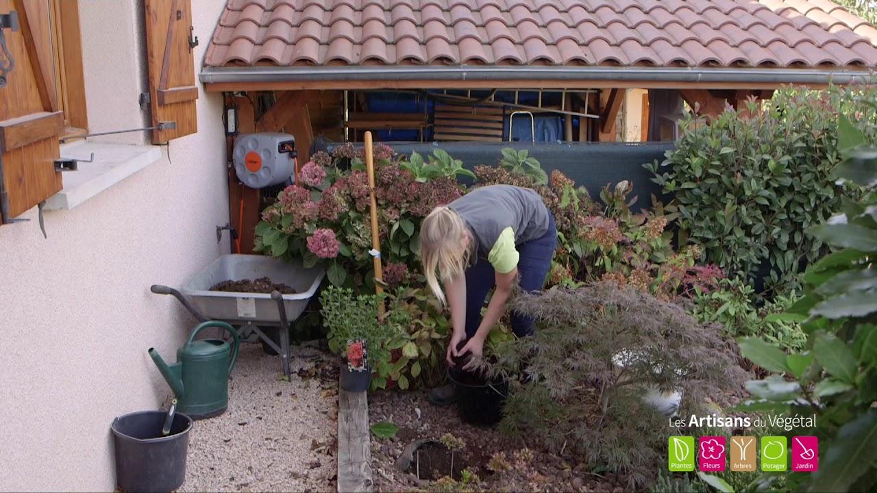 Comment planter une azalée et un rhododendron ? - YouTube