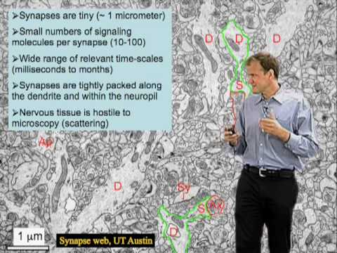 Karel Svoboda (HHMI) Part 1: Optical studies of individual synapses