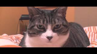 Le plus gros chat du monde apres 5 ans