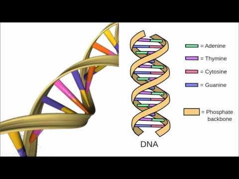 AF SOMALI BASIC GENETICS
