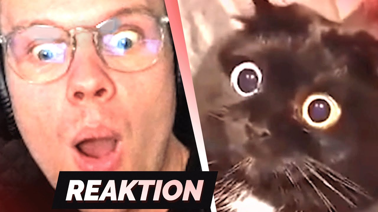 TRY NOT TO LAUGH 21.0 😂 | Reaktion
