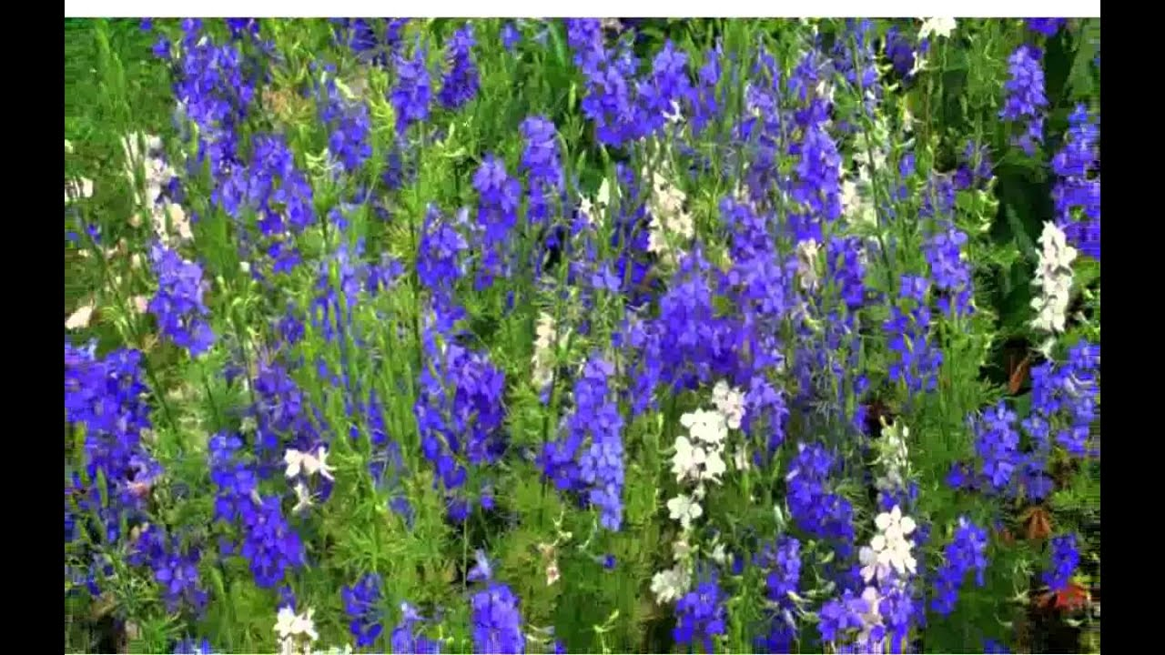 Blue spring flowers images youtube blue spring flowers images dhlflorist Choice Image
