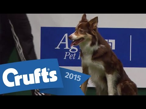 Agility - Championship Final | Crufts 2015