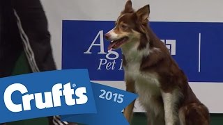 Agility - Championship Final | Crufts 2015
