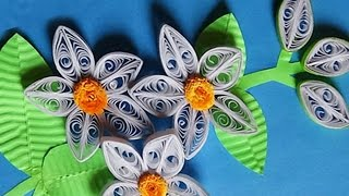 Paper Quilling |How to make  white 3D flowers