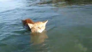 Как плавают коты?Вот как!