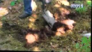 Rok w ogrodzie - Kania jak wysadzić grzybnię