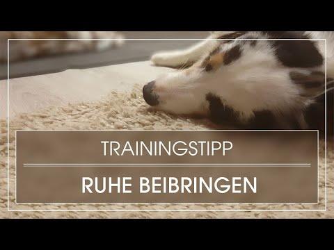 Tutorial: Hund Ruhe beibringen / Hund lernt Ruhe im Alltag und beim Arbeiten / Entspannen beibringen
