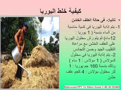 Image result for تحسين القيمة الغذائية للقش والتبن