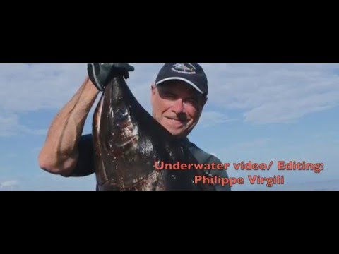 A Record Spearfishing Catch Application? A Few Rules Shown!
