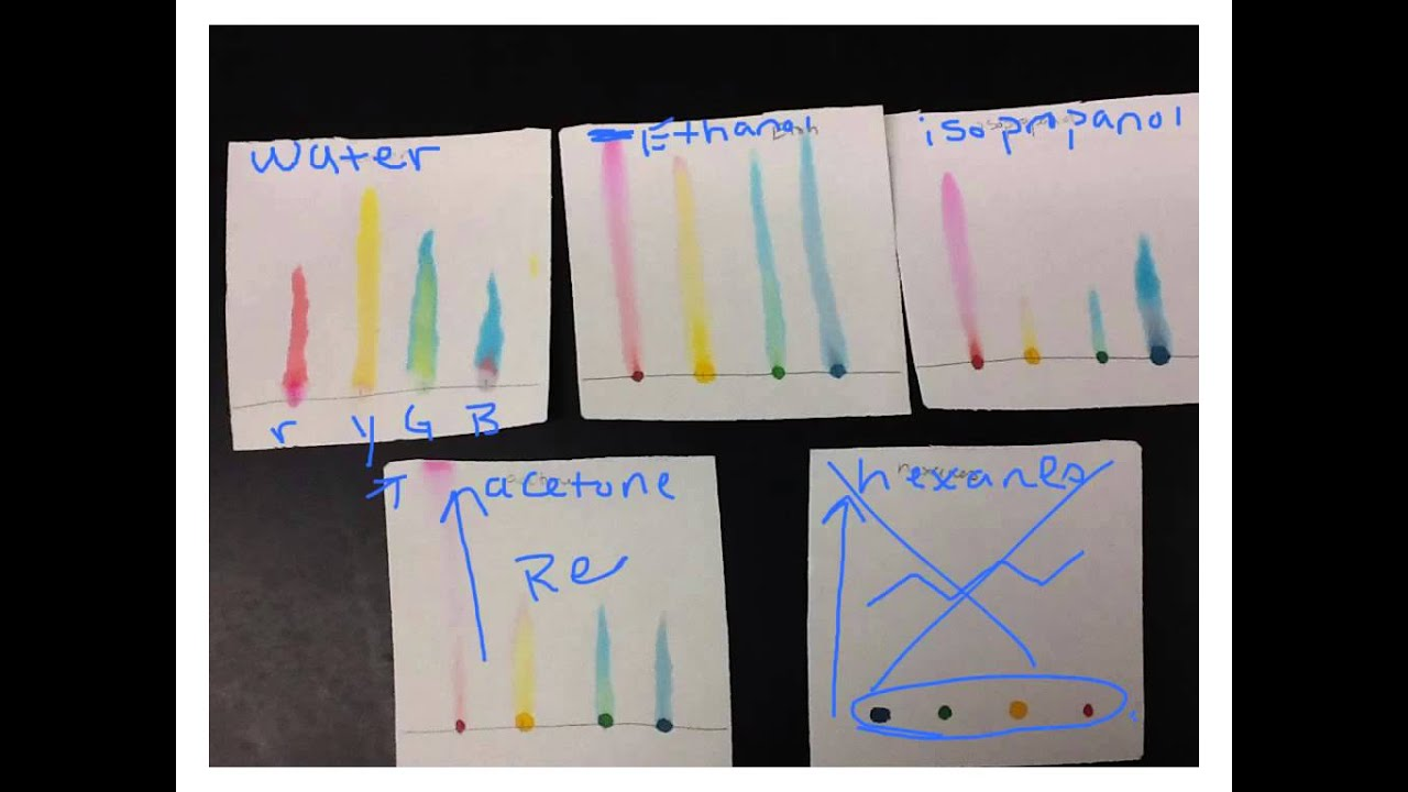 candy chromatography essay example Chromatography trail and investigation essay mixtures which are coloured for example, pigments chromatography is the collective term candy chromatography.