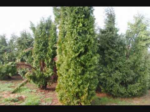 Hello  Notice Please Be Eco Friendly   Plant more trees  aaa VVV XXX ZZZ