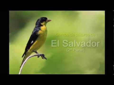 Cantos de Aves de El Salvador II