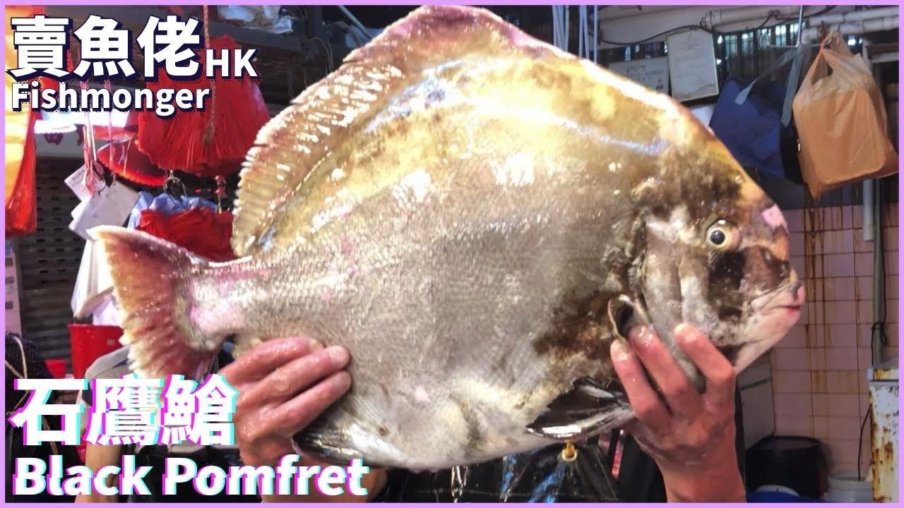休魚期罕有12斤石鷹鯧 |【賣魚佬 OH! Seafood HK】|西環魚王