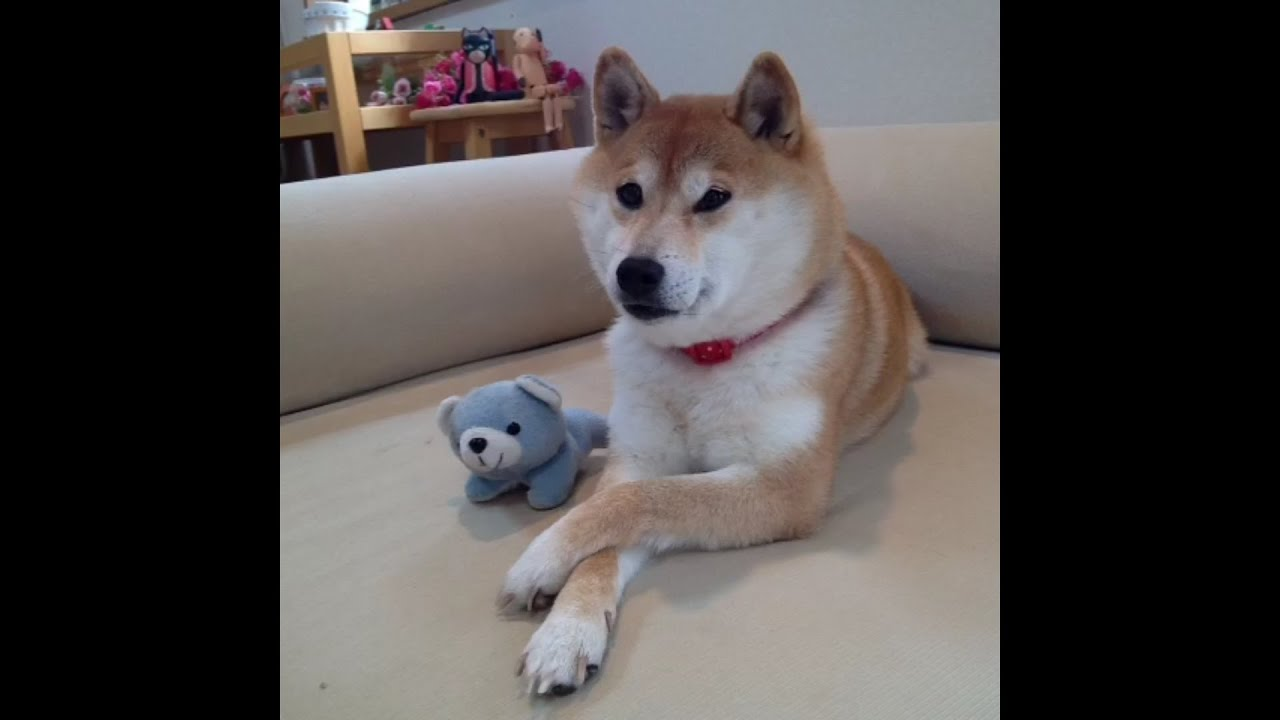So Wow Much Doge