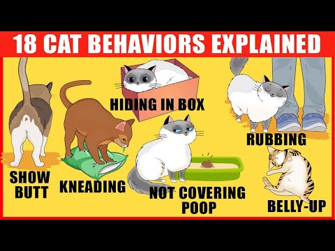 18 Strangest Cat Behaviors Explained (JawDropping Cat Facts)
