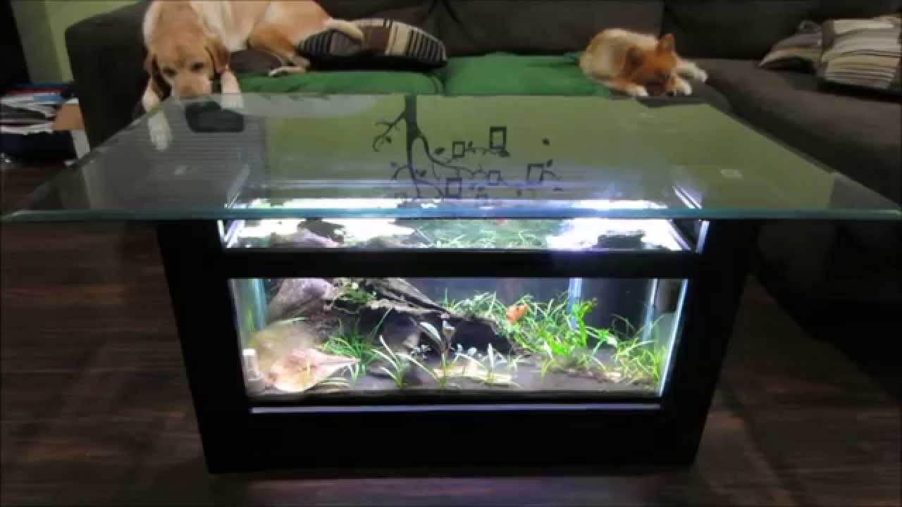 how i made it break down of my coffee table aquarium