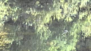 видео Природа вокруг нас