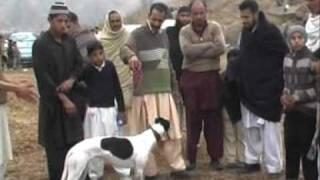 2nd Rawat Race Dog Vs Rabbit (Part 4)