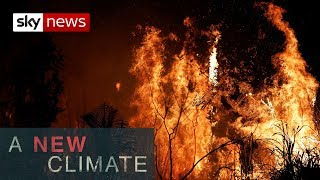 The Amazon rainforest ablaze | A New Climate