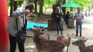 Олени в Нара парке, Япония. Документальный фильм
