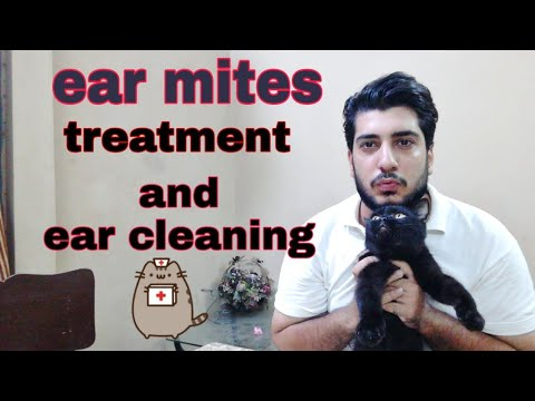 How to clean cat or kitten ears | ear mite treatment ear mite in cats and cat ear cleaner | in urdu|