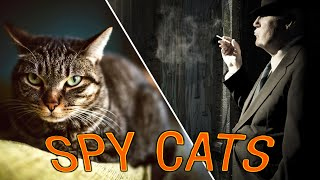 How The CIA Tried Using Cats As Spies