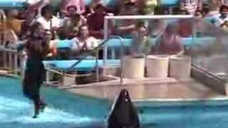 Sea World Shamu Child Inside
