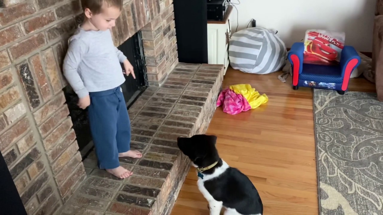 3 year old training our new puppy!