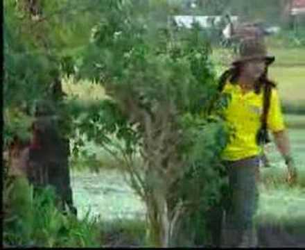 Panji Kuning - Mati Ngadeg (Lagu Pop Bali)