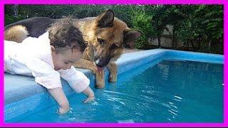 Những Chú Chó Dễ thương Bảo Vệ Em Bé/ Funny dogs protect baby