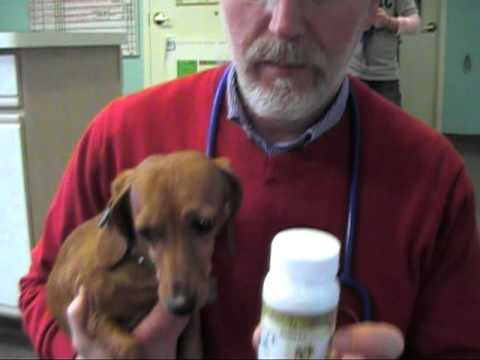 Dr Jim Carlson Holistic Veterinarian Riverside Animal Clinic