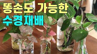 실내에서 화초 키우는 가장 깨끗한 방법 수경재배!! 가…