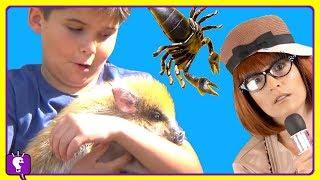 ANIMAL PLANET Adventure COMPILATION w/HobbyBobby and Animals HobbyKidsTV