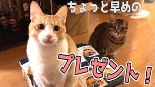 猫たちに少し早めのクリスマスプレゼントをあげました!! thumbnail
