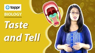 Video Class 5 EVS : From Taste to Digestion | Taste and Tell download MP3, 3GP, MP4, WEBM, AVI, FLV Juni 2018