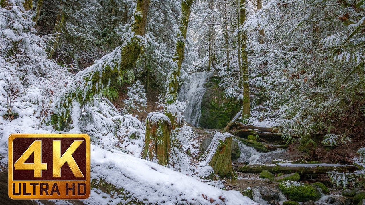 Winter Forest Walk In 4K  2 Hrs Relaxation Video With -4515