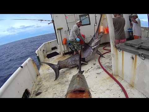 500 lb swordfish bahamas youtube for Florida commercial fishing license
