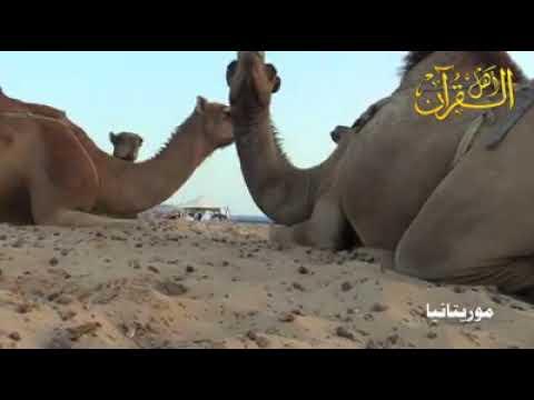 BEAUTIFUL RECITATION   By Young Mauritanian boy   اهل القرآن في موريتانيا