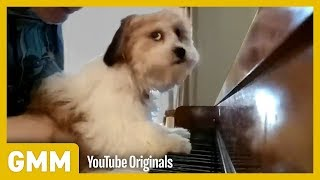 Pets Play Instruments | TEACH YOUR OLD DOG A NEW TRICK