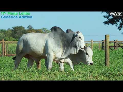 LOTE 88 - DUPLO - REMC A 1890, REM 10019 - 17º Mega Leilão Genética Aditiva 2020