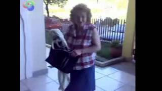 Dog humping a old lady